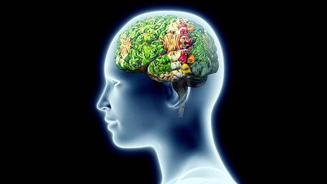 control del apetito dependiente del hipocampo