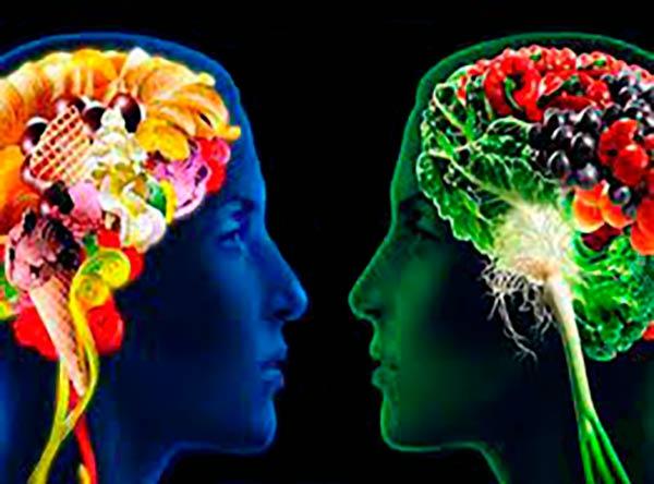 dieta saludable vs dieta WS efectos en cerebro