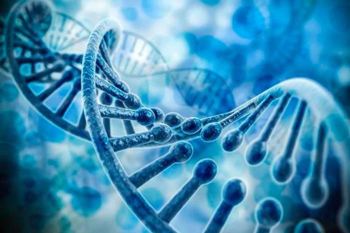 minegenoma que se replica Portada